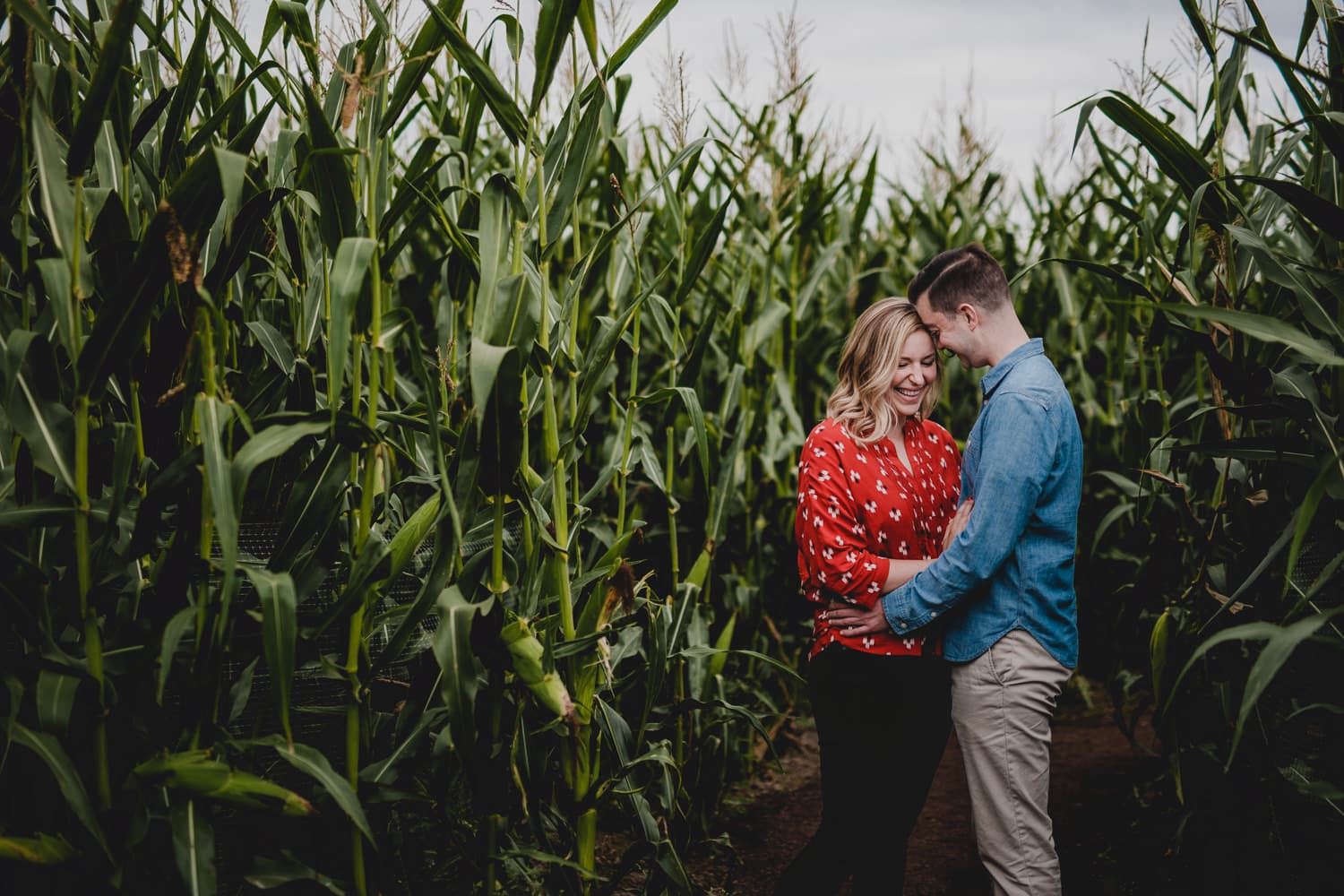 An engagement session in a Cornfield on Sauvie Island, Portland, Oregon.
